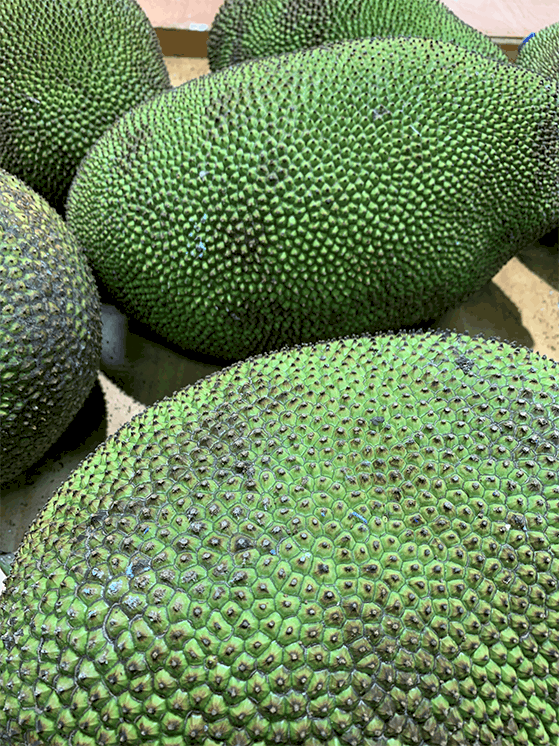 A whole fresh ripe Jackfruit